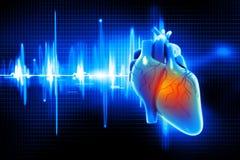 Menselijk hart vector illustratie