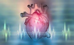 Menselijk hart 3D illustratie op een medische achtergrond royalty-vrije illustratie