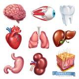 Menselijk hart, hersenen, oog, tand, longen, lever, maag, nier, huid 3d vectorpictogramreeks