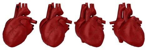 Menselijk hartconcept Stock Afbeelding