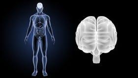 Menselijk Hersenengezoem met organen voorafgaande mening vector illustratie