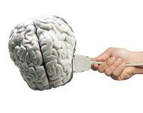 Menselijk hersenenmodel met computerverbinding Stock Fotografie