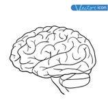 Menselijk hersenenpictogram, vectorillustratie Royalty-vrije Stock Foto