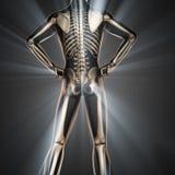 Menselijk het aftastenbeeld van de beenderenradiografie Stock Afbeeldingen