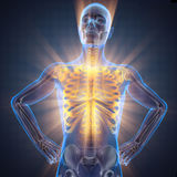 Menselijk het aftastenbeeld van de beenderenradiografie Stock Afbeelding