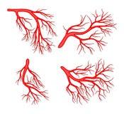 Menselijk het pictogramontwerp van het ader vastgesteld vectorsymbool stock illustratie