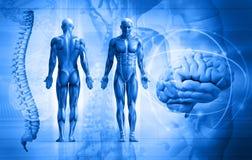 Menselijk lichaam Stock Fotografie