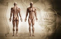 Menselijk lichaam Stock Foto's