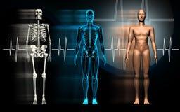 Menselijk lichaam Stock Foto