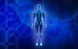 Menselijk lichaam Stock Afbeelding