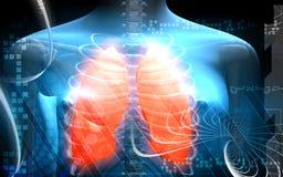 Menselijk lichaam en longen Stock Afbeelding