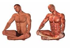 Menselijk lichaam en spiersysteem Royalty-vrije Stock Afbeelding