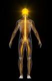Menselijk lichaam met opvlammende neuronen Royalty-vrije Stock Foto's