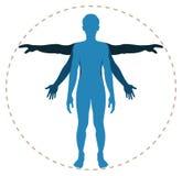 Menselijk lichaamsstructuur Stock Afbeelding