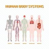 Menselijk lichaamssystemen Stock Foto's
