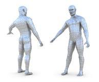 Menselijk mannelijk 3d netwerkmodel Royalty-vrije Stock Afbeeldingen