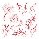 Menselijk oogaders of schip, rode haarvaten, bloedslagaders geïsoleerde reeks royalty-vrije illustratie