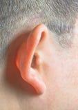 Menselijk oor Royalty-vrije Stock Afbeelding