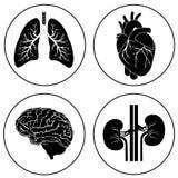 Menselijk organen zwart pictogram Stock Afbeeldingen