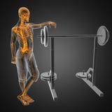 Menselijk radiografieaftasten in gymnastiekruimte Stock Fotografie