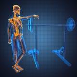 Menselijk radiografieaftasten in gymnastiekruimte Royalty-vrije Stock Afbeeldingen