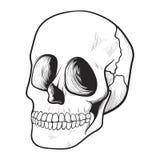 Menselijk schedelpictogram, geneeskunde en griezelig symbool royalty-vrije illustratie