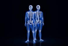 Menselijk skelet Voor en achtermening Bevat het knippen weg Royalty-vrije Stock Fotografie