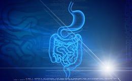 Menselijk spijsverteringssysteem vector illustratie