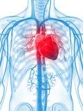 Menselijk vasculair systeem royalty-vrije illustratie