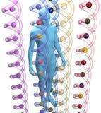 Menselijke 3D genetische de wetenschapspersoon van DNA vector illustratie