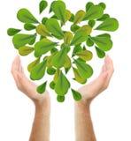 Menselijke boom Royalty-vrije Stock Fotografie