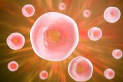 Menselijke cel, dier, wetenschapsachtergrond 3D Illustratie Stock Afbeelding