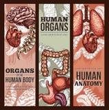 Menselijke de anatomieaffiche van de organen vectorschets Stock Afbeeldingen