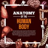Menselijke de anatomieaffiche van de organen vectorschets Royalty-vrije Stock Afbeeldingen