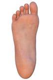 Menselijke die voet op wit wordt geïsoleerd Royalty-vrije Stock Afbeelding