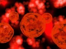 Menselijke eicel Royalty-vrije Stock Afbeeldingen