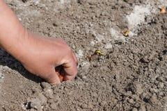 Menselijke hand die een boog planten aan de grond Royalty-vrije Stock Fotografie