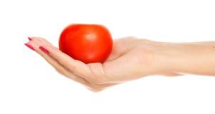 Menselijke hand die rode tomaat houdt royalty-vrije stock fotografie