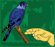 Menselijke hand en een blauwe vogel Stock Foto