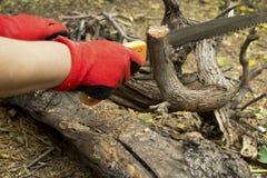 Menselijke hand met handsaw die de boomtak snijden stock foto's