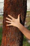 Menselijke hand op de boomschors Stock Foto's