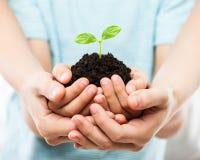 Menselijke handen die de groene groei van het spruitblad houden bij vuilgrond Royalty-vrije Stock Foto
