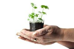Menselijke handen die groene installatie houden Royalty-vrije Stock Foto's