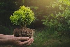 Menselijke handen die het groene kleine concept van het installatieleven houden Conc ecologie royalty-vrije stock foto's