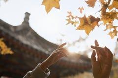 Menselijke handen die voor een blad in de herfst bereiken, lensgloed Royalty-vrije Stock Fotografie