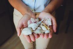 Menselijke handen, vrouwen die zeeschelpen, zeester houden Royalty-vrije Stock Foto's