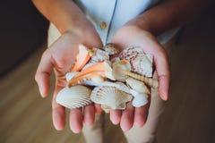 Menselijke handen, vrouwen die zeeschelpen, zeester houden Royalty-vrije Stock Foto