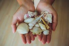 Menselijke handen, vrouwen die zeeschelpen, zeester houden Stock Foto