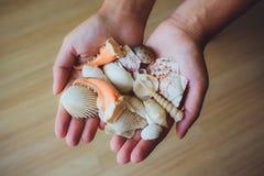 Menselijke handen, vrouwen die zeeschelpen, zeester houden Stock Afbeelding