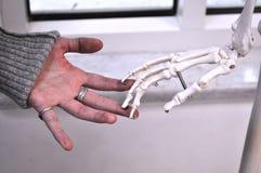 Menselijke handen wat betreft handbeenderen Stock Foto's